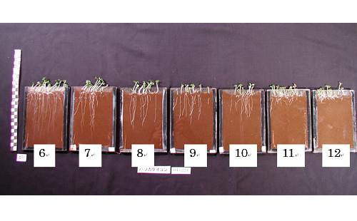 土壌のpH値